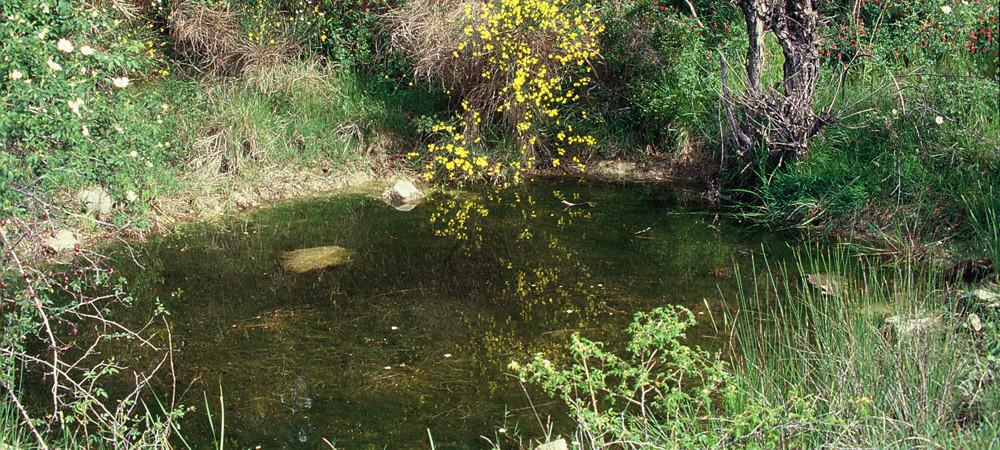 Proteggereglianfibi-habitat-Impruneta-Firenze