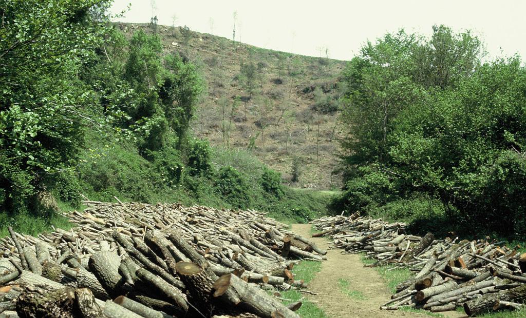 Tagli forestali: maggiori sono l'ampiezza della superficie interessata e il grado di meccanizzazione utilizzato, maggiore è l'alterazione della qualità degli habitat