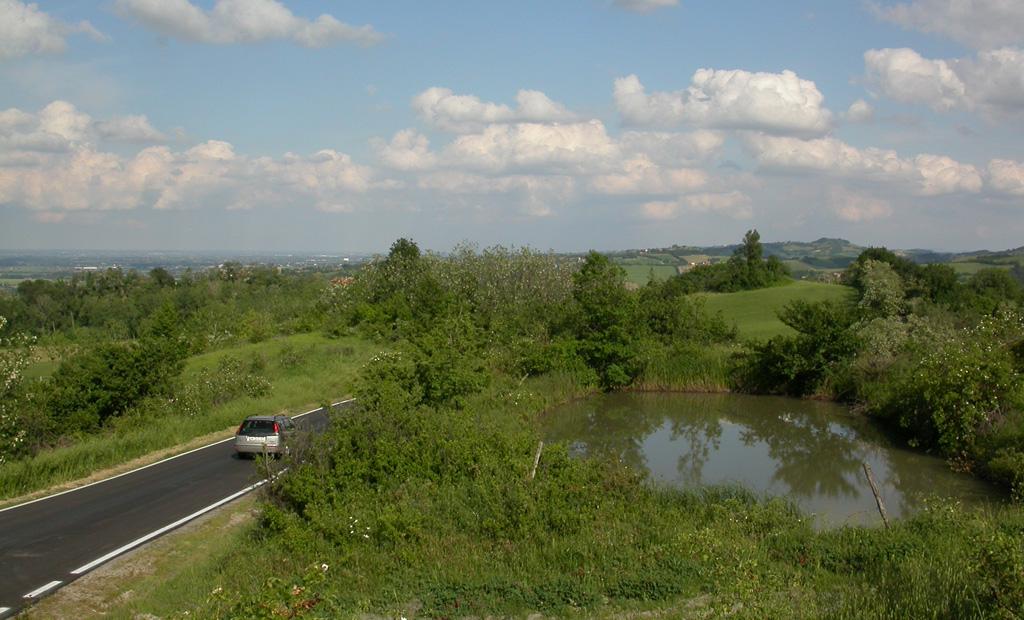 Una strada accanto ad una zona riproduttiva degli Anfibi