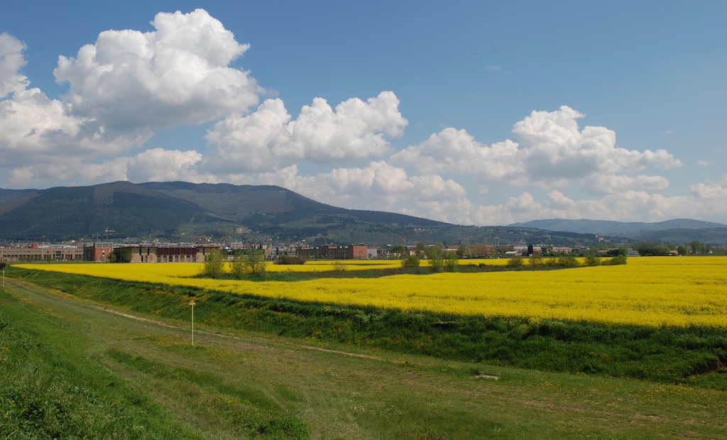 Il nucleo storico dell'Oasi all'interno di campi agricoli (aprile 2010)