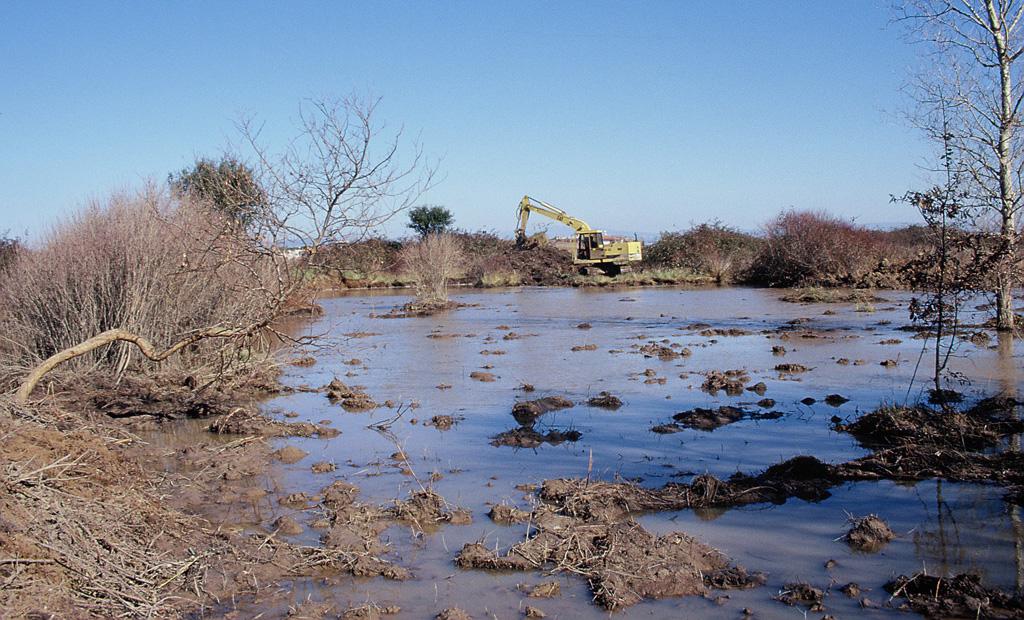 Ripristino di un'area acquitrinosa presso l'Oasi WWF Laguna di Orbetello. Orbetello, Grosseto (anno 1998). Progetto di Carlo Scoccianti