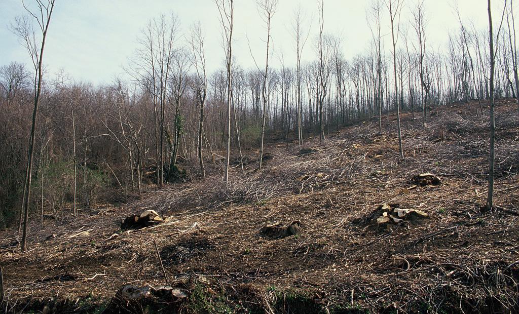 Tagli forestali: tanto maggiori sono l'ampiezza della superficie interessata e il grado di meccanizzazione tanto maggiori sono l'alterazione della qualità degli habitat e i tempi necessari a ristabilirsi delle condizioni originarie.