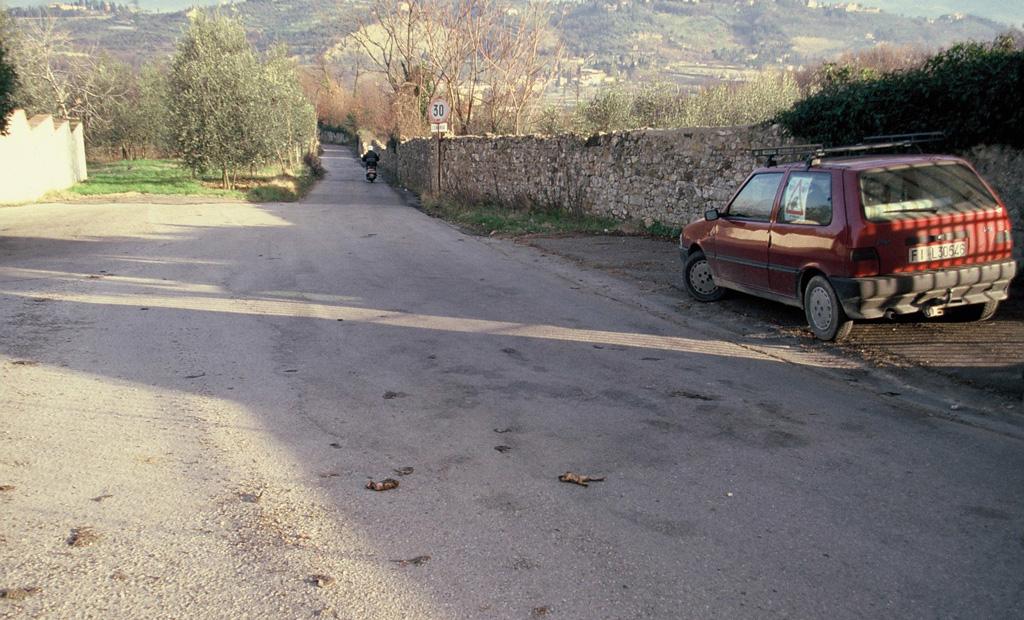 Decine di resti di Rospi (Bufo bufo) investiti su tratto di strada ('punto focale di attraversamento'). Impruneta, Firenze (anno 1996)