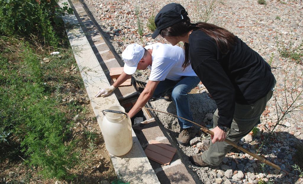 Volontari tentano il recupero di individui caduti nei pozzetti stradali in un'area di cantiere. Sesto Fiorentino, Firenze (anno 2008)