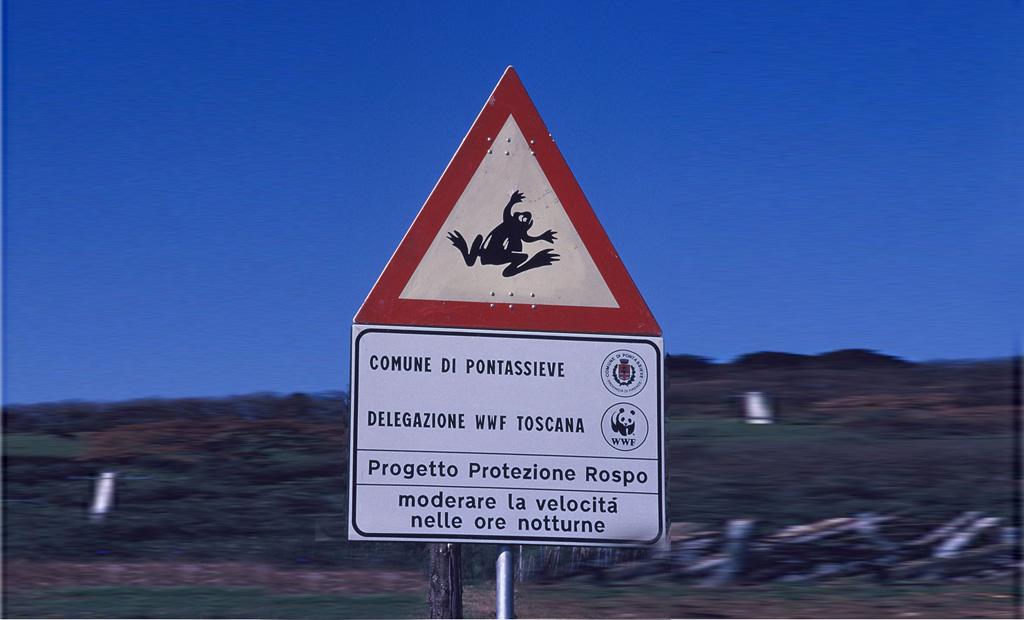 Cartello segnaletico presso un tratto di strada a rischio per le migrazioni degli Anfibi ('punto focale di attraversamento'). Pontassieve, Firenze (anno 1993)